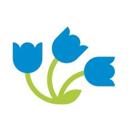 Цветы Дёшево, сеть магазинов
