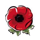 Цветы & Подарки & Шары, сеть магазинов цветов